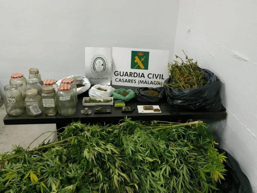 Plantación incautada en Casares