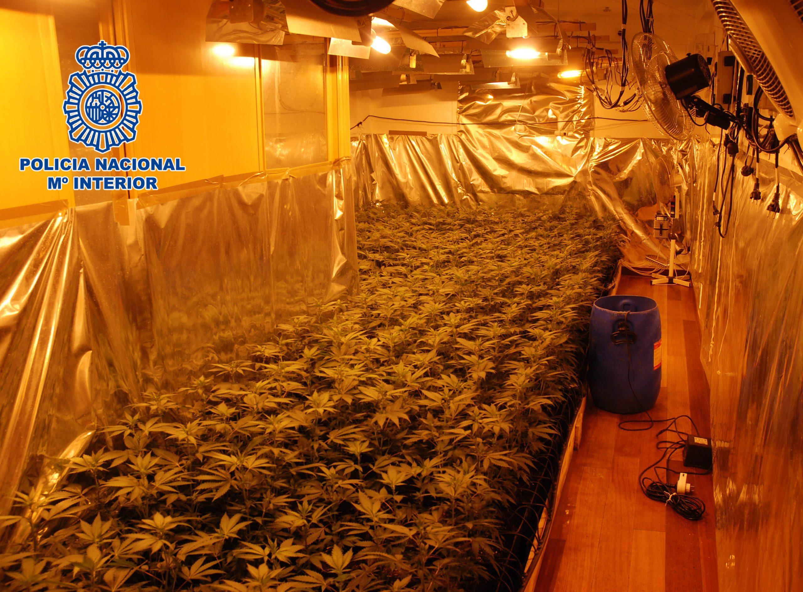 Imagen de archivo de una plantación 'indoor' de marihuana.