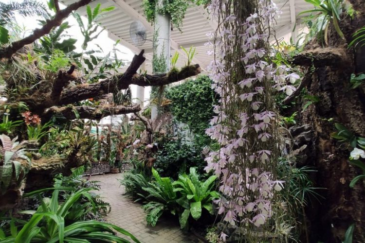 El Orquidario de Estepona alberga más de 150 especies de flores diferentes