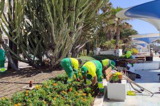Los jardineros renuevan las plantas del entorno del paseo marítimo de Estepona.